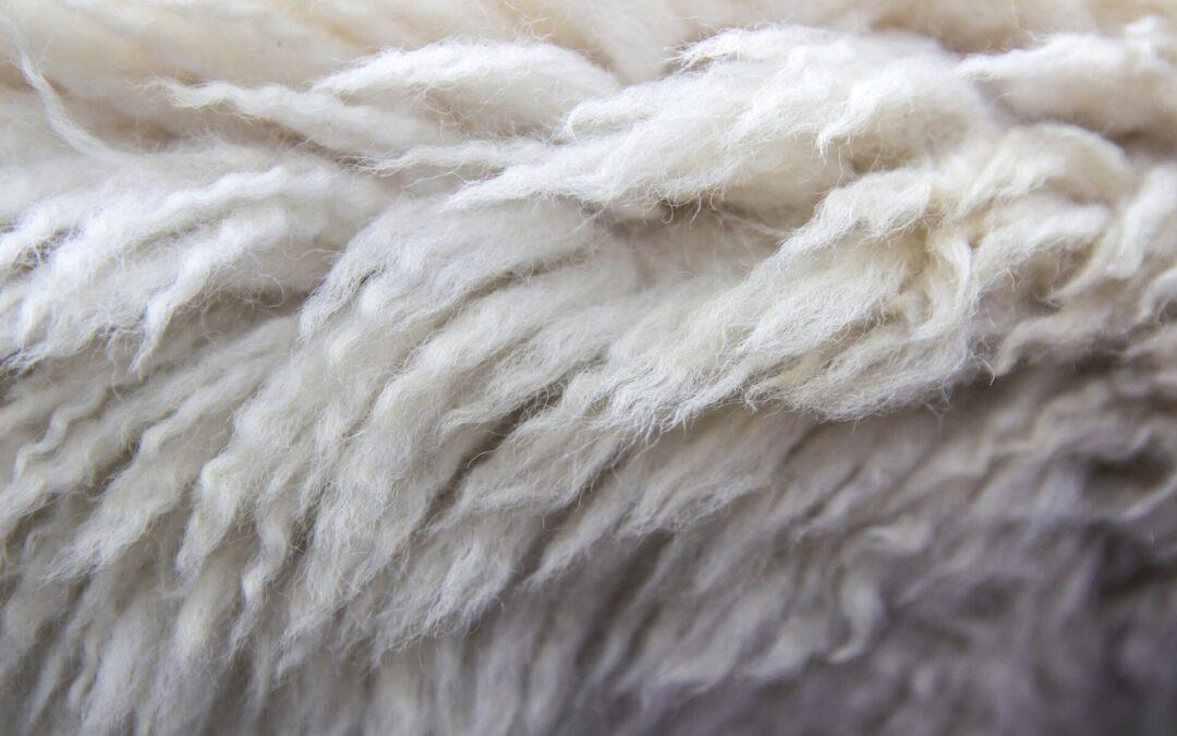 Dywany Wełniane z Niebarwionej Wełny